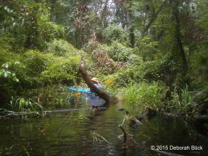 Run toward Alligator Spring