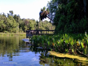 Alexander Springs Recreation Area, Ocala National Forest