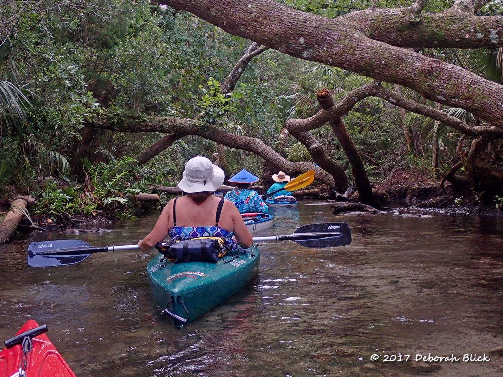 Paddling through a network of leaning trees