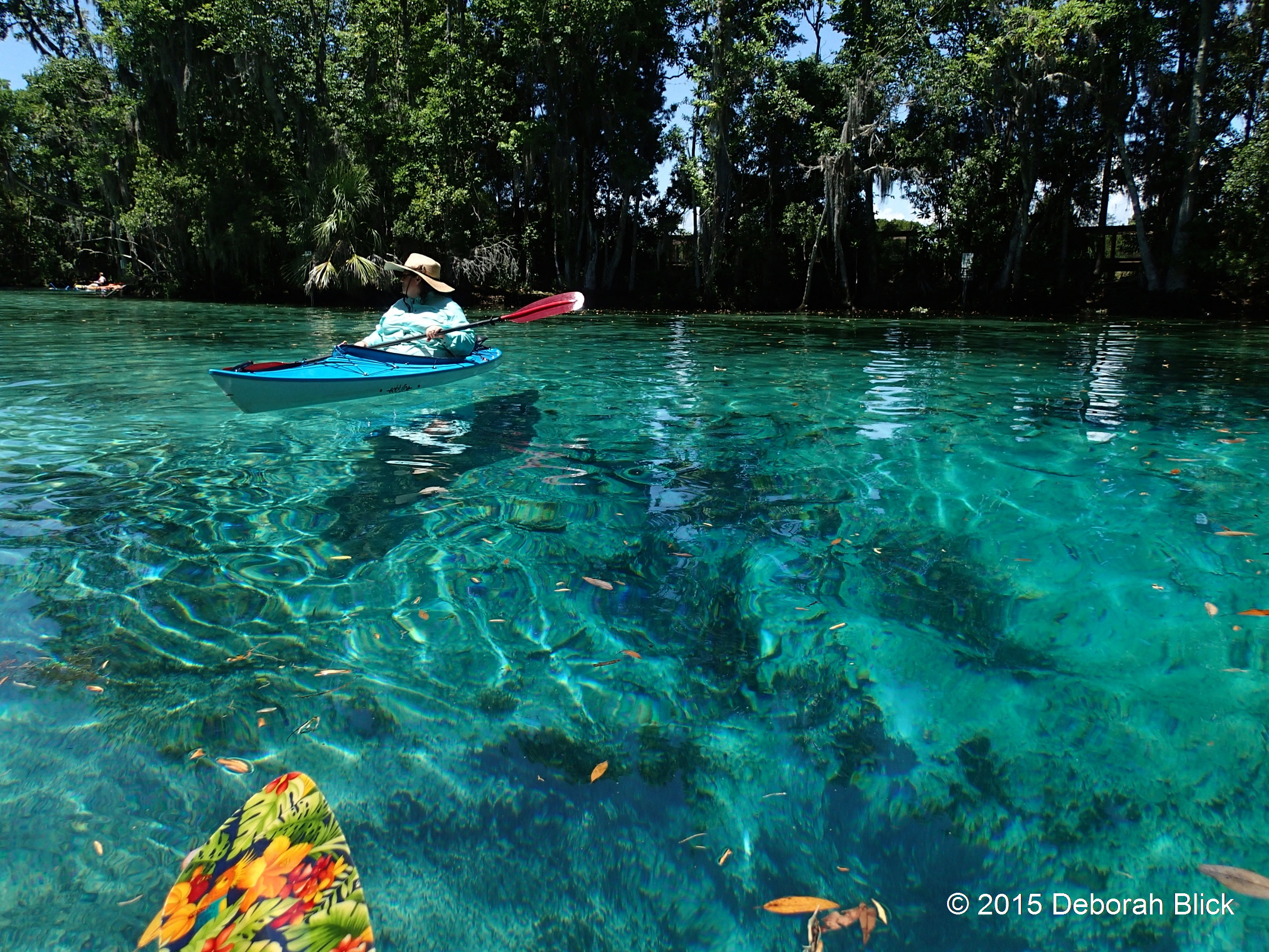 Crystal River Three Sisters Springs