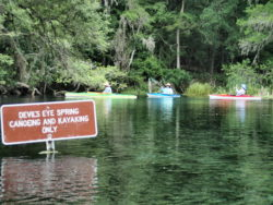 Checking out Devils Eye Spring - usually turtles, gar and occasionally a gator