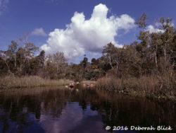 Juniper Creek under blue skies and white clouds