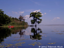 We coast along the western shore of expansive Lake George, a wide spot in the St Johns River.
