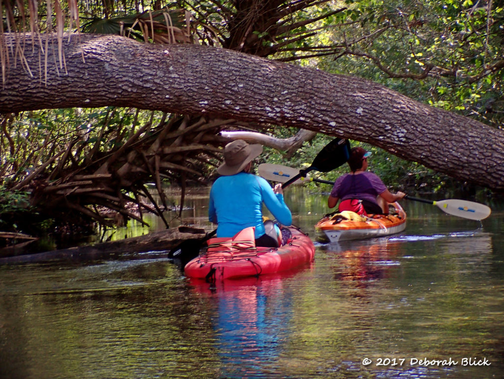 Paddling under a downed tree