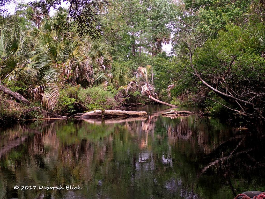 Typical Juniper Creek scene.