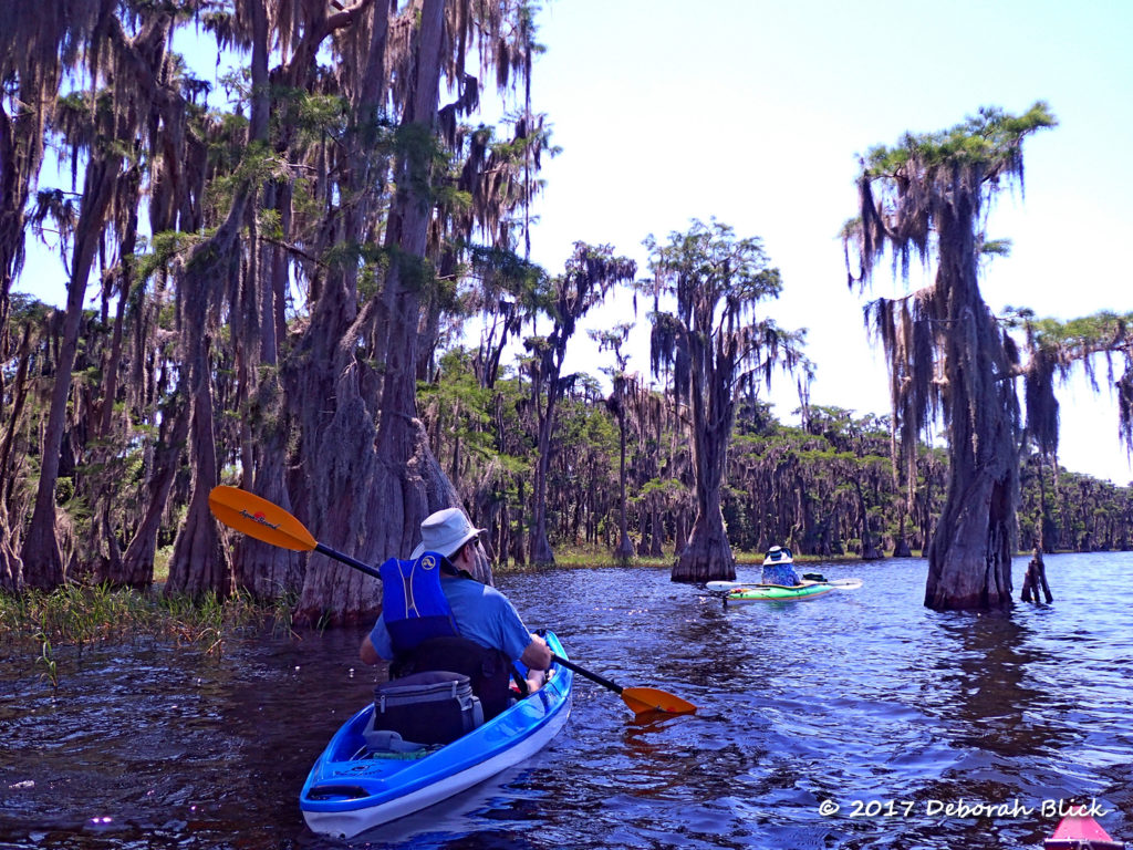 Paddling through the cypress on Lake Santa Fe