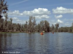 Lovely paddle under fluffy white clouds on the Ocklawaha north of CR 316.