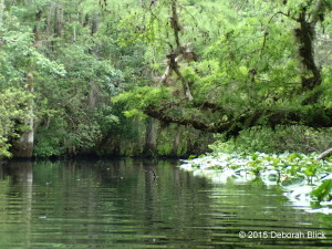Bear Creek, Ocklawaha River
