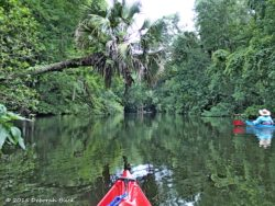 Floating down the Ocklawaha River