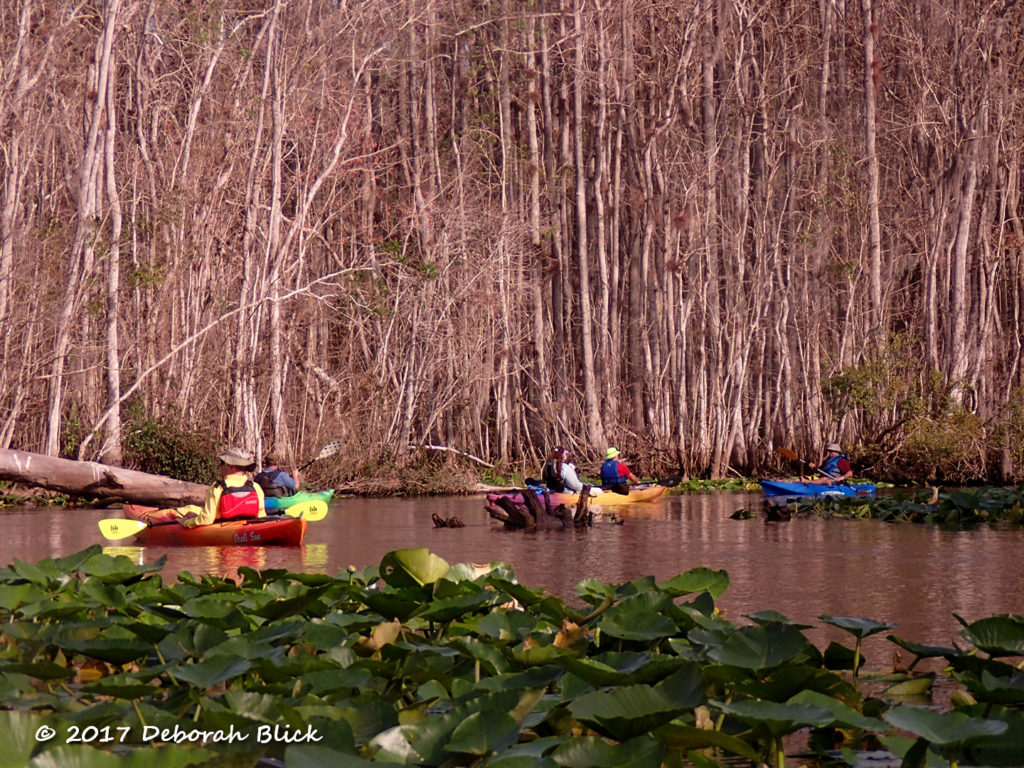Colorful kayaks coasting downstream on the winding Ocklawaha River