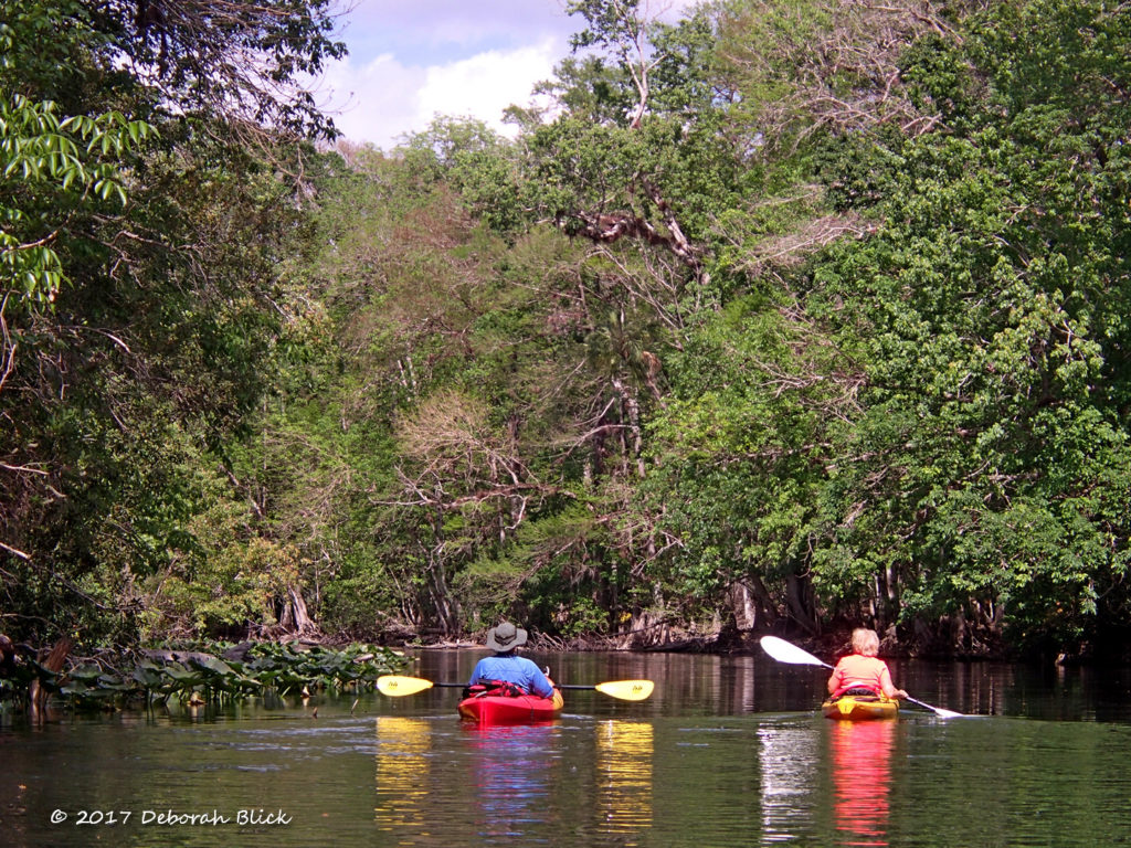 Rounding a bend in the Ocklawaha