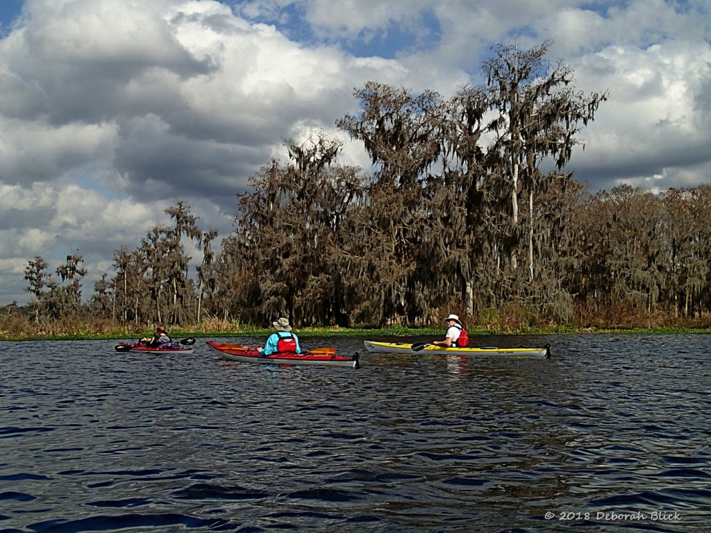 Paddling amid the cypress trees