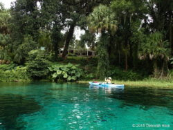 Rainbow Springs head spring area
