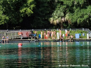 Swimming area at Rainbow Springs