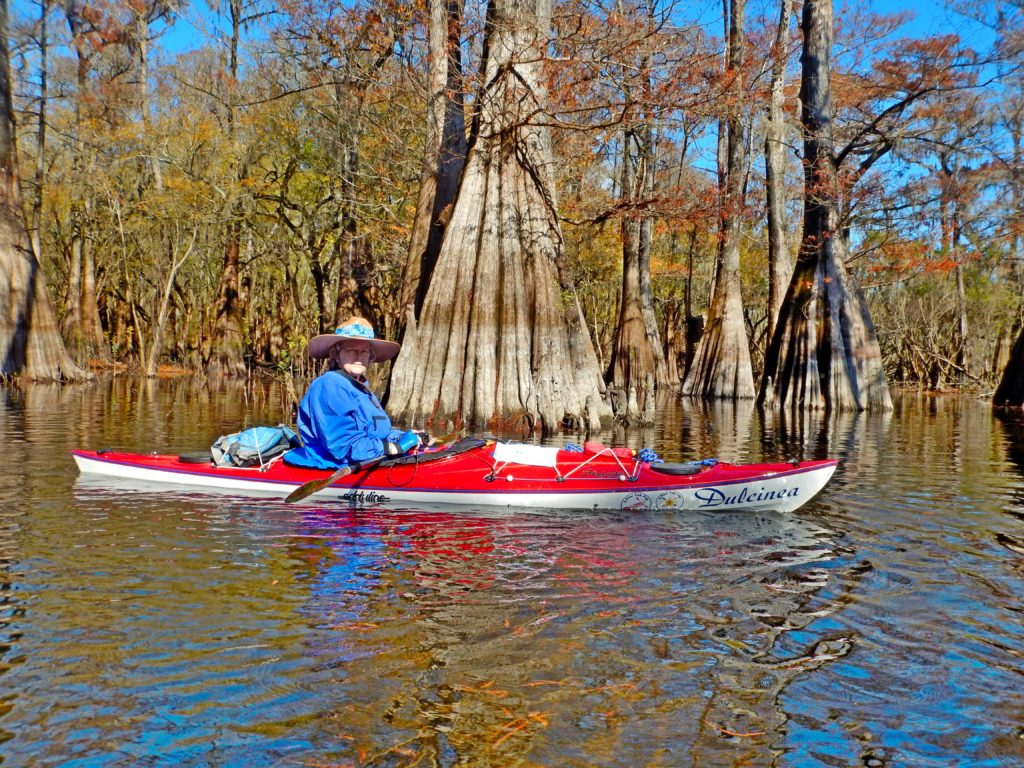 Dulcinea in the cypress on the Santa Fe River