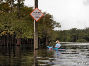 Santa Fe River, Suwannee River, kayaking, sturgeon