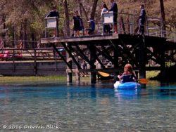 Gilchrist Blue Spring