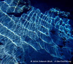 Underwater shot at Ginnie Springs. I loved the play of light on the sand bottom of the spring vent.