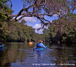 Santa Fe River just outside of Ginnie Springs, under Water Oaks and blue skies.