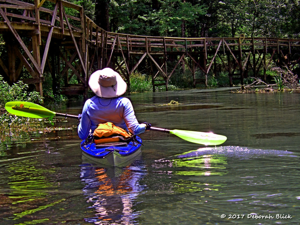 Paddling up the Gilchrist Blue Springs run