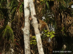 A little Rhesus macaque peeking at me.