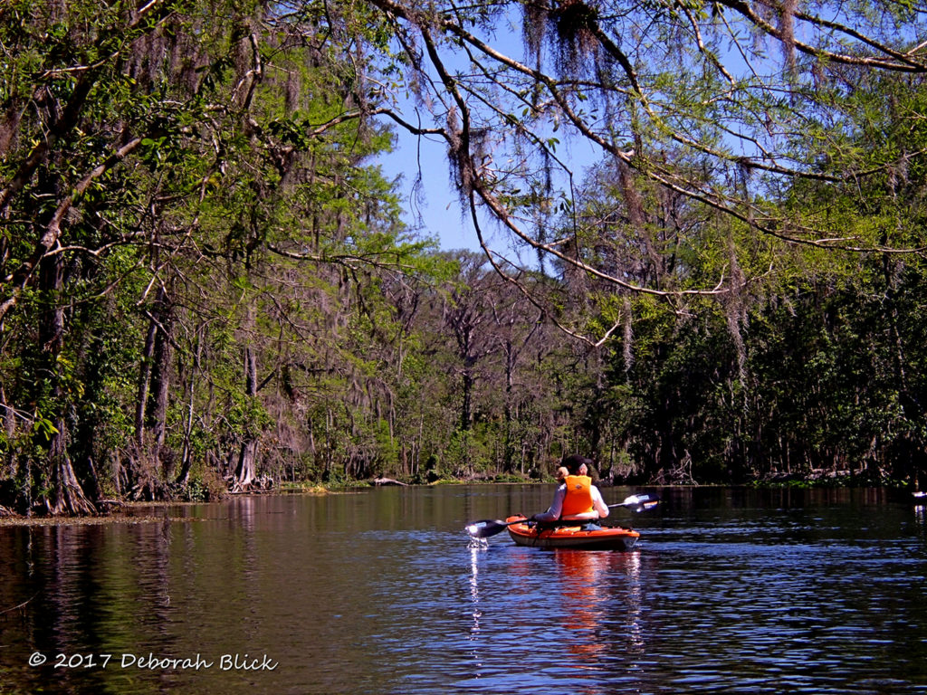 Paddling the Silver River under spring foliage and blue skies