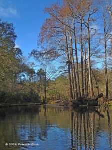 Upper Steinhatchee River - narrow, twisting and tree-lined.