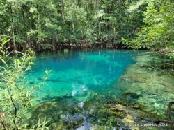 Manatee Springs - 1st magnitude spring pumping 100 million gallons into the Suwannee each day.