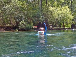 Snorkling at Manatee Springs