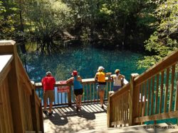 Looking down into Royal Spring from the boardwalk