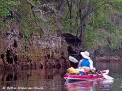 Beautiful limestone bluffs and cypress tress along the Suwannee River.