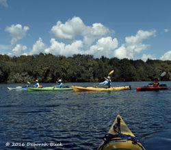 A kaleidoscope of colorful kayaks under fluffy clouds near Manatee Springs.