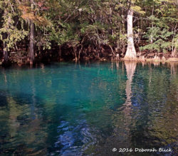 Manatee Springs head spring
