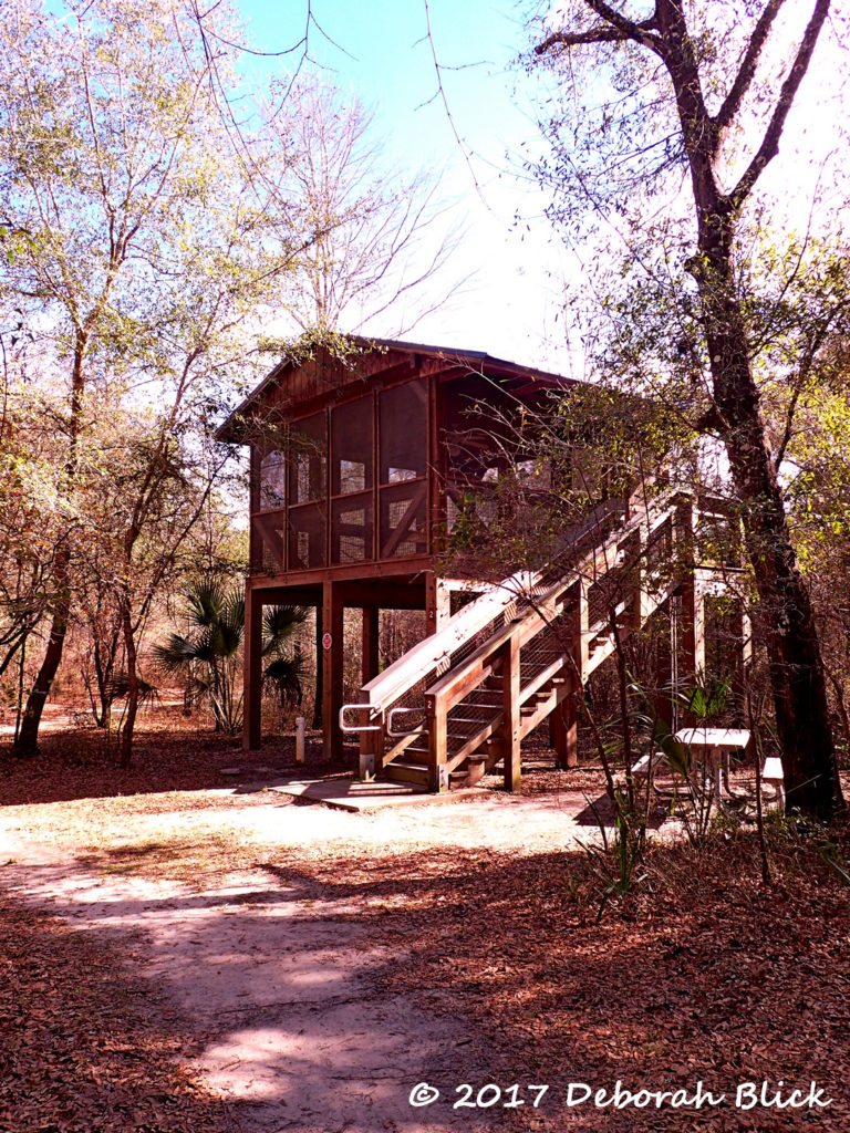 One of the sleeping platforms at Dowling Park River Camp