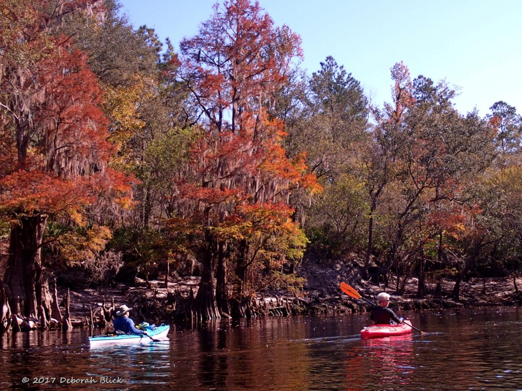 A little fall color from the cypress trees