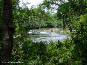 Suwannee, Suwannee River, Shoals
