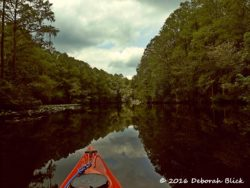 More spring reflections on the Withlacoochee.